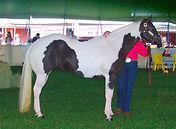 Paint_Horse_REFON.jpg
