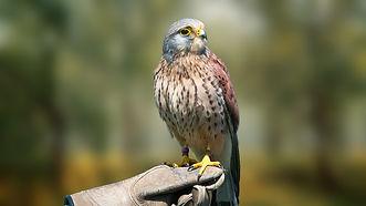 bird-3107057_1920 (1).jpg