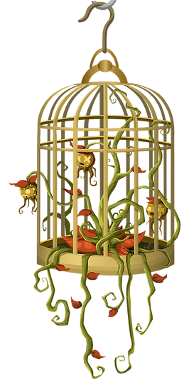 bird-cage-575823_1280.png