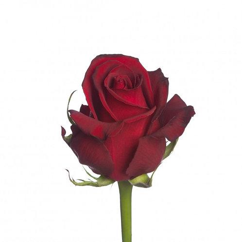 Роза (Кения) 37 см.