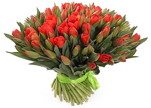 101 Тюльпан, красный