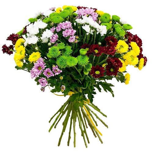 25 Хризантем кустовых Сантини-микс