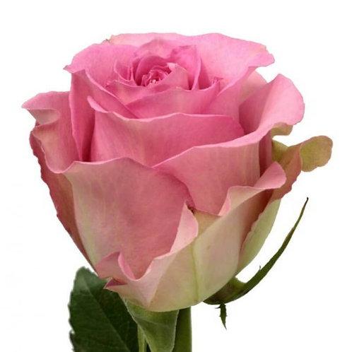 Роза (Эквадор) 60 см.