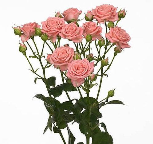 Роза кустовая 60 см.