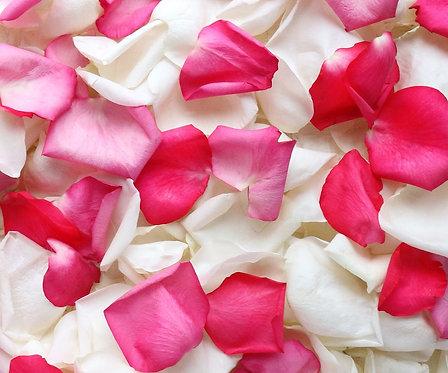 Розовые и белые лепестки роз
