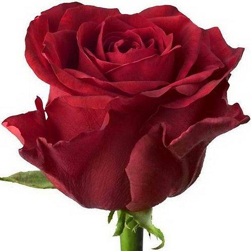 Роза (Эквадор) 90 см.