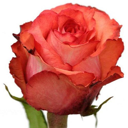 Роза (Эквадор) 40 см.