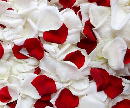 Красные и белые лепестки роз
