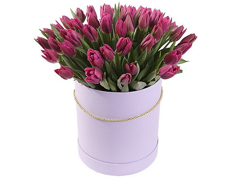 51 Тюльпан в шляпной коробке, пурпурный
