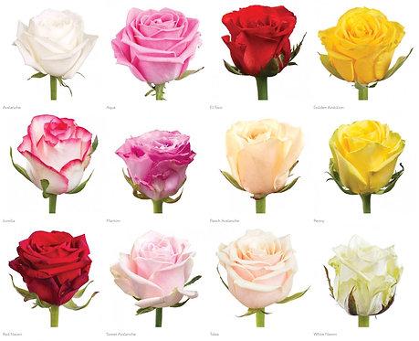 Роза (Россия) 50 см.