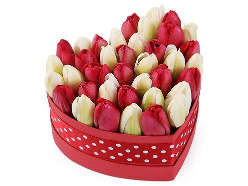 51 Тюльпан в малой коробке-сердце, красно-белый микс