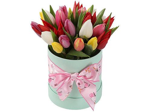 25 Тюльпанов-микс в шляпной коробке