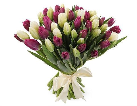 51 Тюльпан, бело-пурпурный