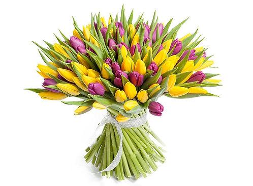 101 Тюльпан, желто-фиолетовый