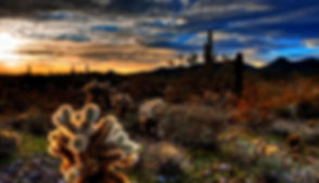 sunsets-nature-desert-cacti-sunset-landscape-wallpaper-with-quotes_edited.jpg
