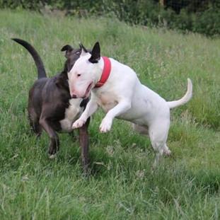 Daisy was Dolly (right)