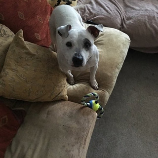 Dobby (Now Patch)