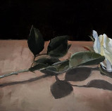 Pale Rose, Still life