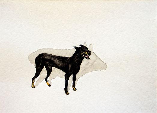 perro chancho.jpg