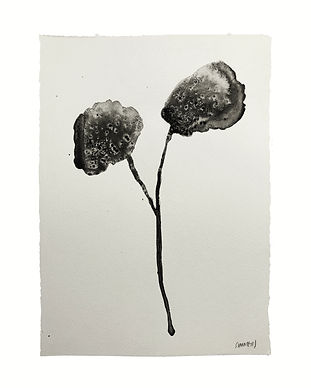 Two Flowers for nobody - Guillermo Summe