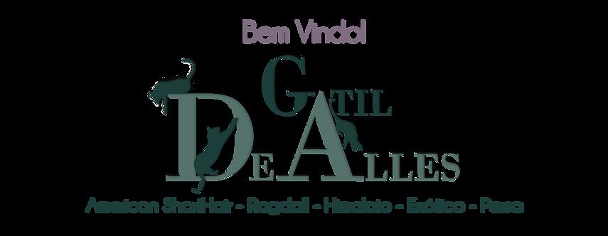 Gatil DeAlles 3 gatos bem vindo champgna