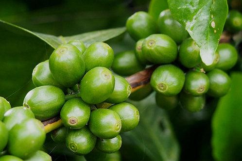 Bali Organic RFA Kintamani Natural