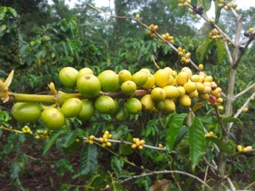 Organic Papua New Guinea