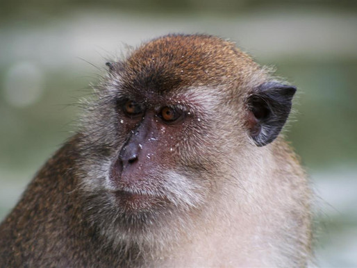 Introducing the Monkey in 2018