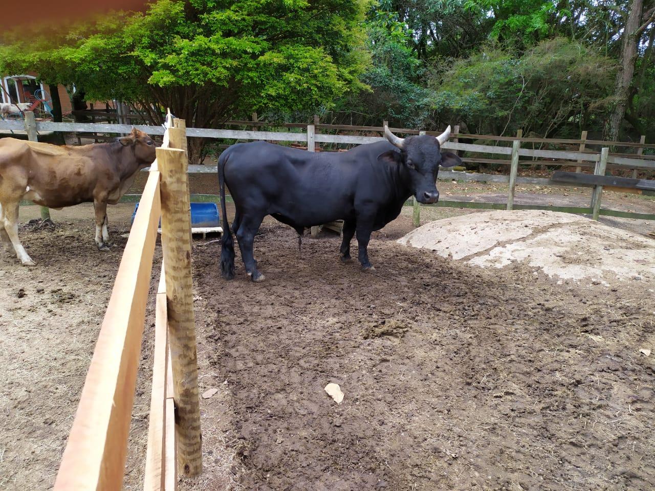 Mini fazenda