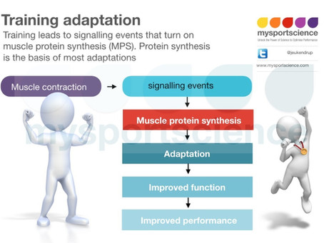 Use of anabolic signaling data to inform nutrition and training recommendations