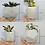 Thumbnail: Black & rose gold concrete succulent planter set of 3