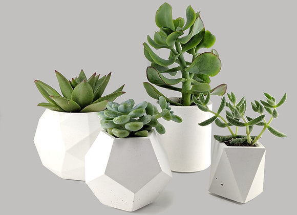 White succulent planter set