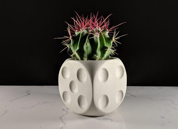 Dice succulent planter