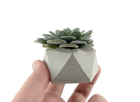 Miniature succulent planter & echeveria pot