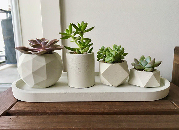 Succulent planter set with real plants - Ready for pickup