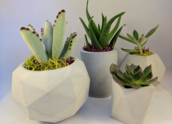 Geometric succulent planter set of 4
