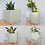 Thumbnail: Cube concrete succulent planter set