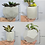 Thumbnail: White succulent planter set