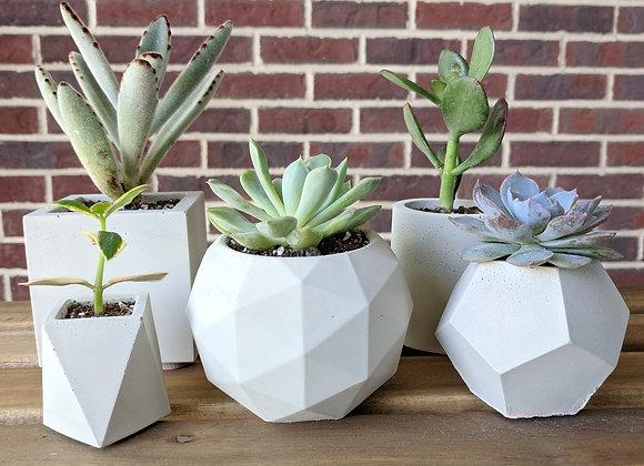 Concrete succulent planter set of 5