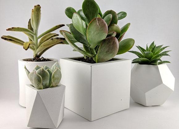 Cube concrete succulent planter set
