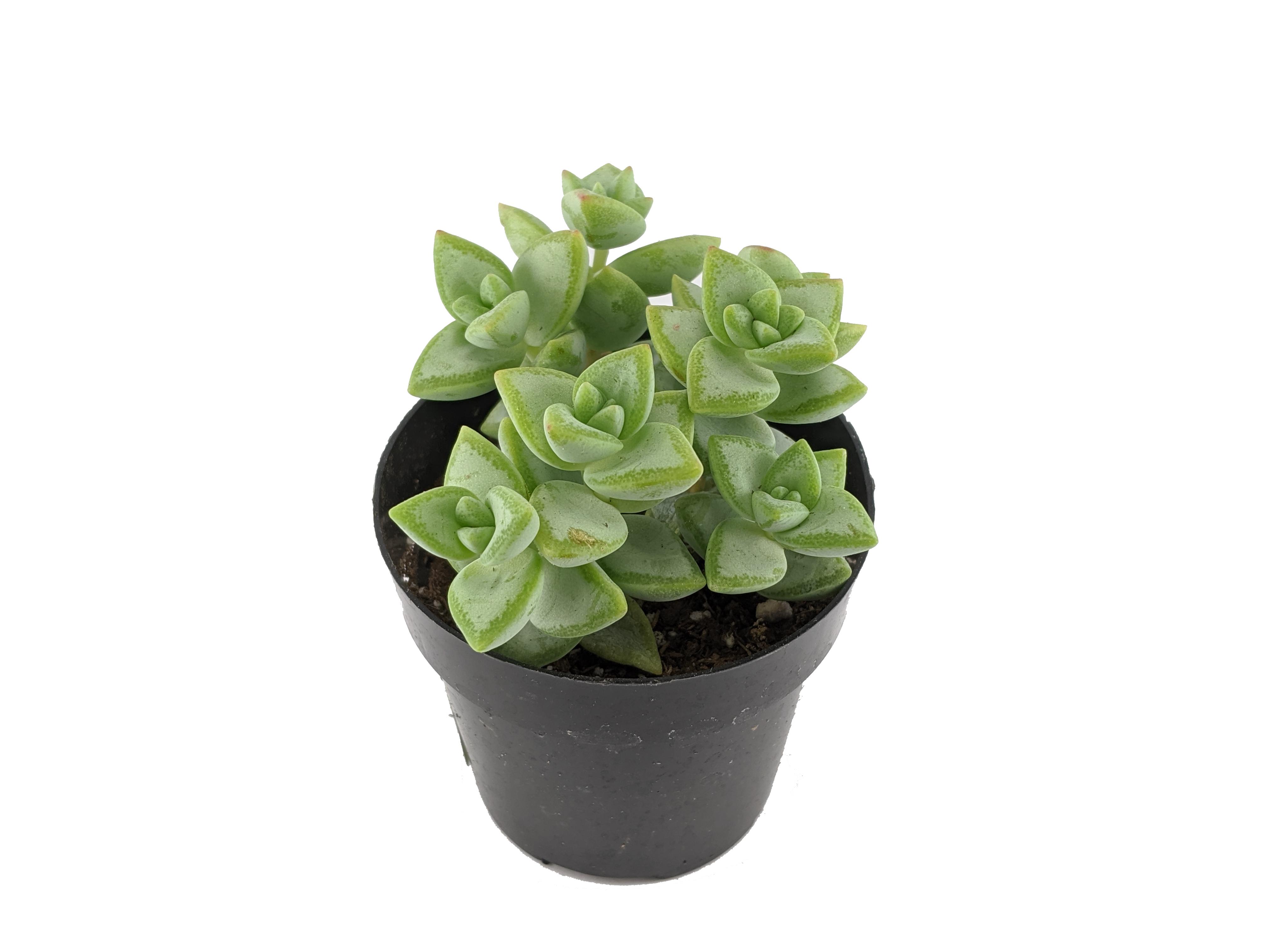 We have plants!