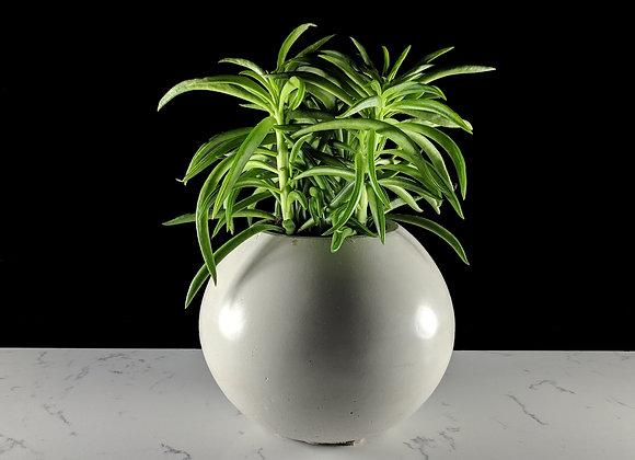 Sphere indoor pot