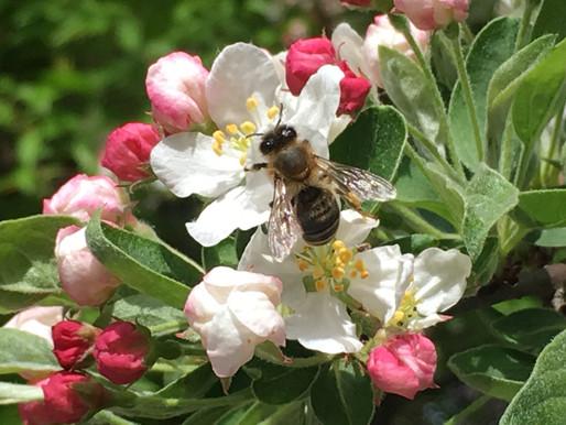Im Dienste der Honigproduktion