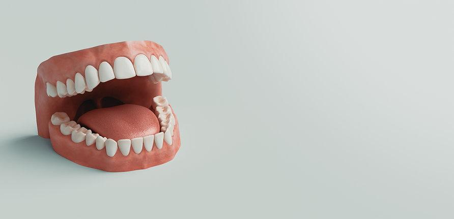 dental_model_health_teeth_cosmetic_dentistry.jpg