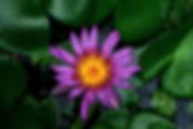 Raphael Lopez de Soto | Psychotherapist | Adult Psychotherapy