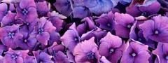 693_Petal colour_273.JPG