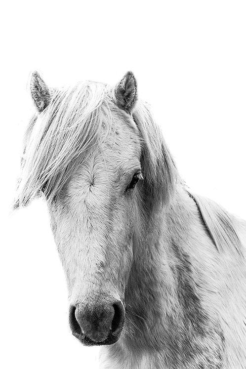 Harry Horse