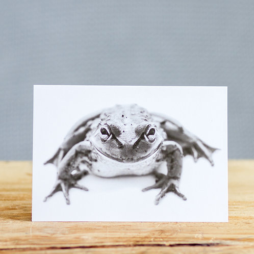 Fred frog - card
