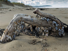 690_Mussels at Riversdale_446.JPG