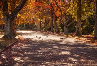 Masterton Park 3.jpg